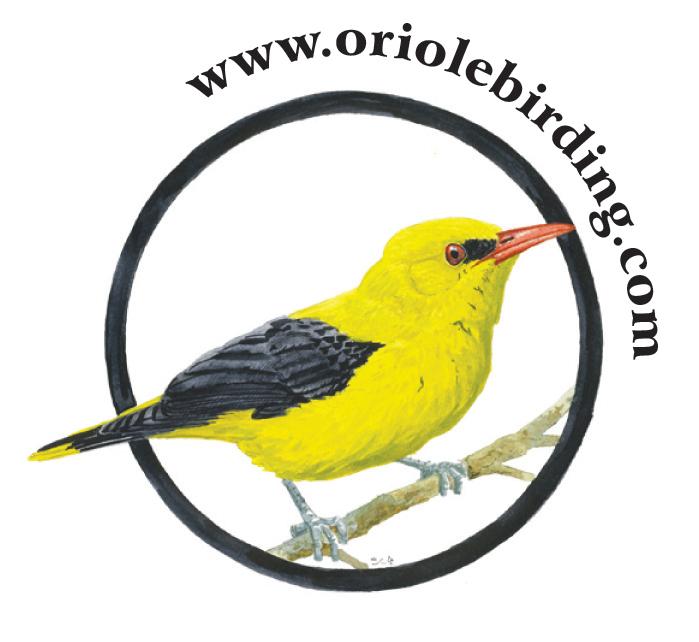 Oriole-Birding-logo